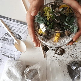 Terrarium DIY Home Kit with Free Delivery or Workshop in Funan